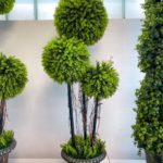Natural Living ,green Wall, zeleni zid