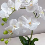 Orhideja