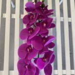 Natural Living ,green Wall, zelenilo, orhideja