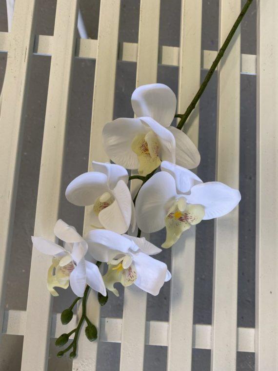 Natural Living ,orhideja