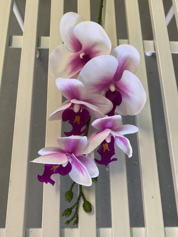Natural Living ,orhideje