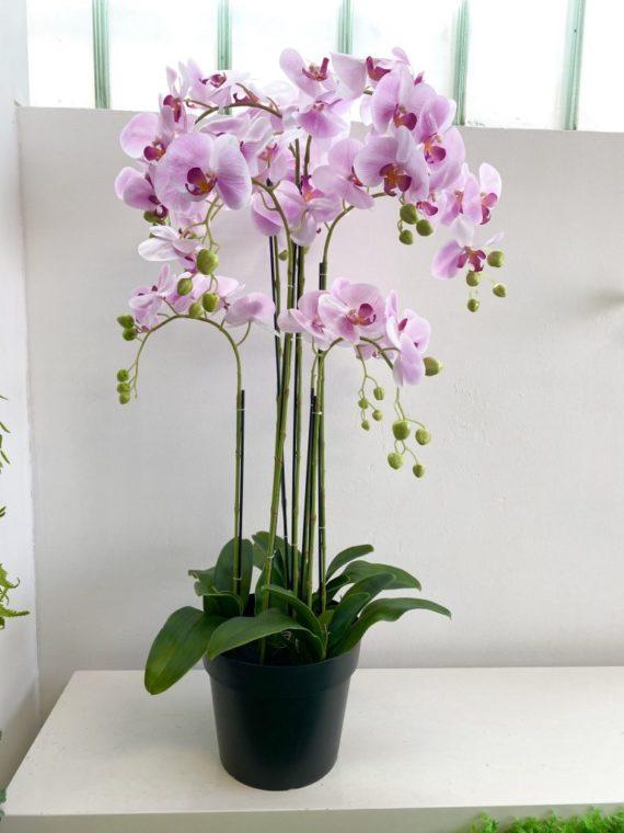 Natural Living ,green Wall, zelenilo,orhideja