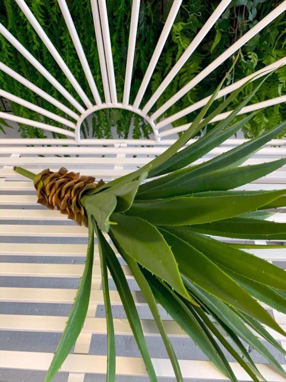 agava (10)