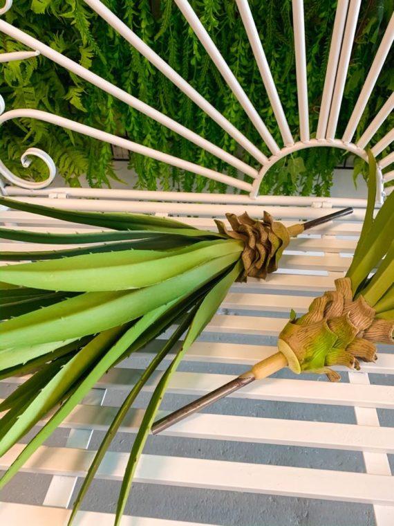 agava (12)