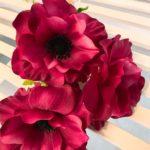 anemona (2)