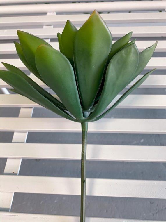 kaktus (3)