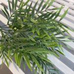 palmica (1)