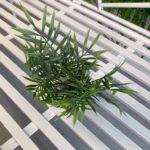 palmica (2)