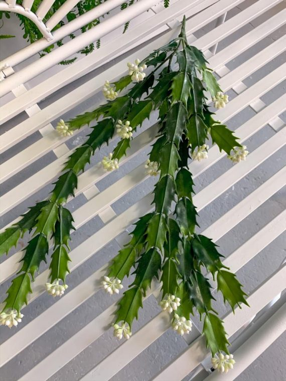 viseće-zelenilo (13)