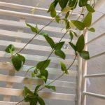viseće-zelenilo (2)