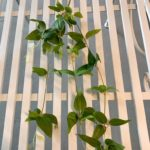 viseće-zelenilo (4)