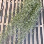 viseće-zelenilo (7)