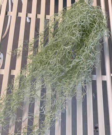 umjetno viseće zelenilo