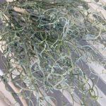 zelenilo (2)