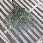 zelenilo (6)