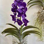orhideja_11