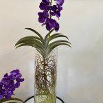 orhideja_6