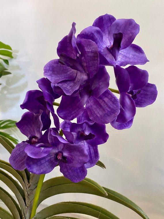 orhideja_7