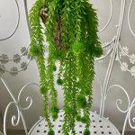visece zelenilo_2