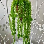 visece zelenilo_21