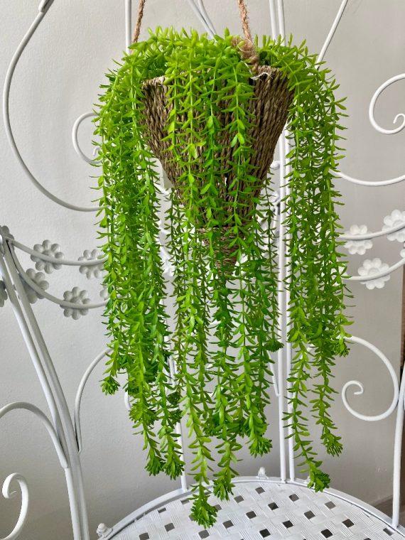 visece zelenilo_29