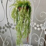 visece zelenilo_31