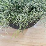 zelenilo_5